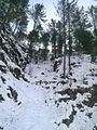Snowy Forest.jpg