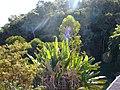 Soledade de Minas - State of Minas Gerais, Brazil - panoramio (9).jpg