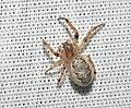 Spider of some kind (43999129931).jpg