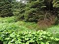 Springwell Forest - geograph.org.uk - 2022093.jpg