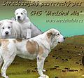 Středoasijský pastevecký pes- Odor Mortis Patisha.jpg