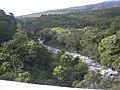 Starr-031210-0120-Aleurites moluccana-habit and view stream-Kaupo-Maui (24050264173).jpg