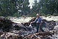 Starr-990514-0761-Tetragonia tetragonioides-Being burnt with Forest-Sand Island-Midway Atoll (24500594936).jpg