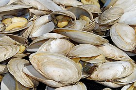 Steamed clams - Wikipedia, the free encyclopedia