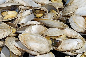 English: Steamed clams (steamers). Photo taken...