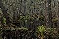 Stenshuvud National Park, the swamp.jpg