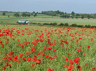 M50 motorway (Great Britain) - In Herefordshire the road passes mainly along gentle contour lines of many cultivated fields and pastures, including this field of poppies.