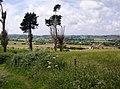 Strange trees - geograph.org.uk - 469756.jpg