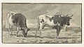 Studie van twee koeien in een wei, RP-T-1916-27.jpg