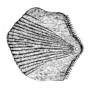 Study of Fishes-Fig 14