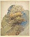 Study of a Tree MET DP829461.jpg