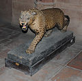 Stuffed animal in Bikaner Fort.jpg