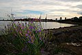 Sunderland city view and Flowers - panoramio.jpg