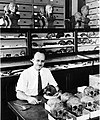 T. Dale Stewart Examining Skull at Desk.jpg