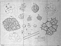 T. Schwann, Mikroskopische Untersuchungern u Wellcome L0032288.jpg