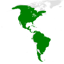 Tachycineta distribution map.png
