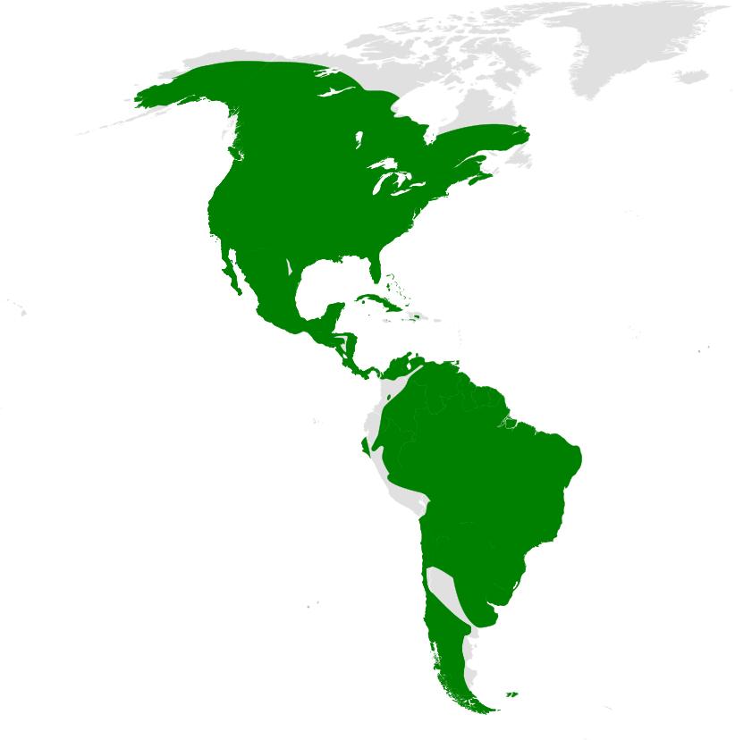 Tachycineta distribution map