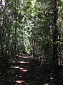 Tangkiling Nature 09.jpg