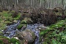 Tapolanjärveen laskeva puro Siltalahden tulipaikan pohjoispuolella, Liesjärven kansallispuisto, Tammela, 15.11.2014 (2).JPG