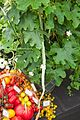 Tatton Park Flower Show 2014 040.jpg