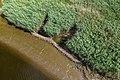 Technisch-biologische Ufersicherung an der Wümme, Versuchsstrecke 1 (50678709471).jpg