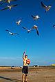 The Bird Feeder (7103011423).jpg