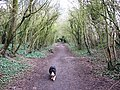 The Disused Railway Line from Wendover to Halton - geograph.org.uk - 1230842.jpg