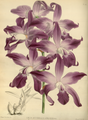 The Orchid Album-02-0006-0049.png