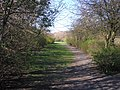 The Path to Kingslaw Park - geograph.org.uk - 401002.jpg