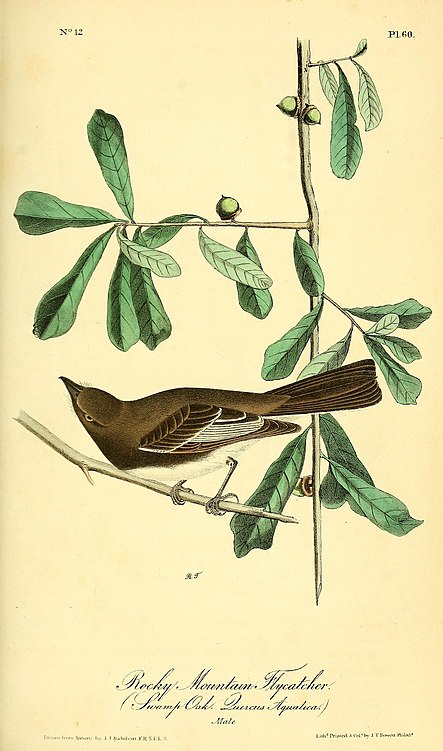 File:The birds of America - from drawings made in the United States and their territories (1840) (14562271208).jpg