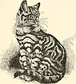 The cat, a guide to the classification and varieties of cats and a short tratise upon their care, diseases, and treatment (1895) (14577860918).jpg