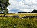The edge of Balblair Wood - geograph.org.uk - 917248.jpg