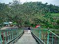 Thrikkadeeri -I, Kerala, India - panoramio (9).jpg