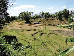 Tiered rice paddies south of Baucau.jpg
