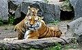 Tiger berlin-3.jpg