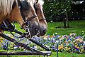 To hester.jpg