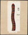 Tortrix scytale - 1700-1880 - Print - Iconographia Zoologica - Special Collections University of Amsterdam - UBA01 IZ11400007.tif