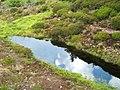 Touchadam Miniature Pond - geograph.org.uk - 474385.jpg