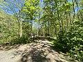 Trail at Stephens State Park in Hackettstown, NJ - 1.jpg