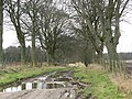 Tree lined farm track - geograph.org.uk - 360695.jpg