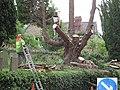 Tree surgeons at work, St Mary's Churchyard - geograph.org.uk - 831946.jpg