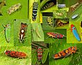Treehopper - 2013.jpg