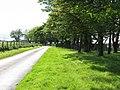 Trees, Blackburn - geograph.org.uk - 450202.jpg