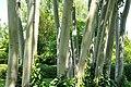 Trees (4615661870).jpg
