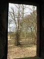 Trees at Greenknowe Tower - geograph.org.uk - 739257.jpg