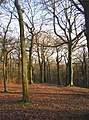 Trees in North Cliffe Wood, Shipley - geograph.org.uk - 285883.jpg