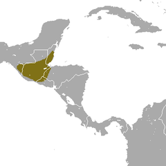 Tropical Small-eared Shrew area.png