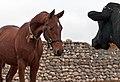 Turkmen Studfarm - Flickr - Kerri-Jo (4).jpg