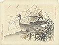 Twee ganzen tussen riet Bloemen- en vogelschetsen van Keinen (serietitel) Keinen kacho gafu (serietitel op object), RP-P-2004-508D-11.jpg