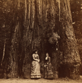 Two Women standing in front of tree, by Watkins, Carleton E., 1829-1916 (cropped).png
